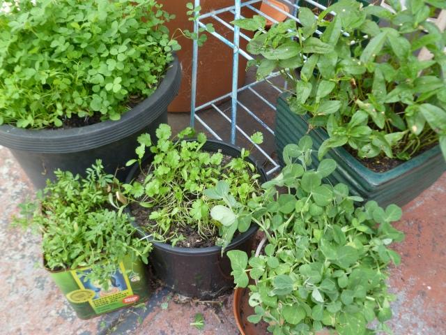Microgreens I